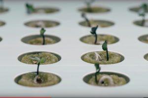 室内で育てる提案はいかが?IKEAが調査した室内で植物を育てている人60%というデータ